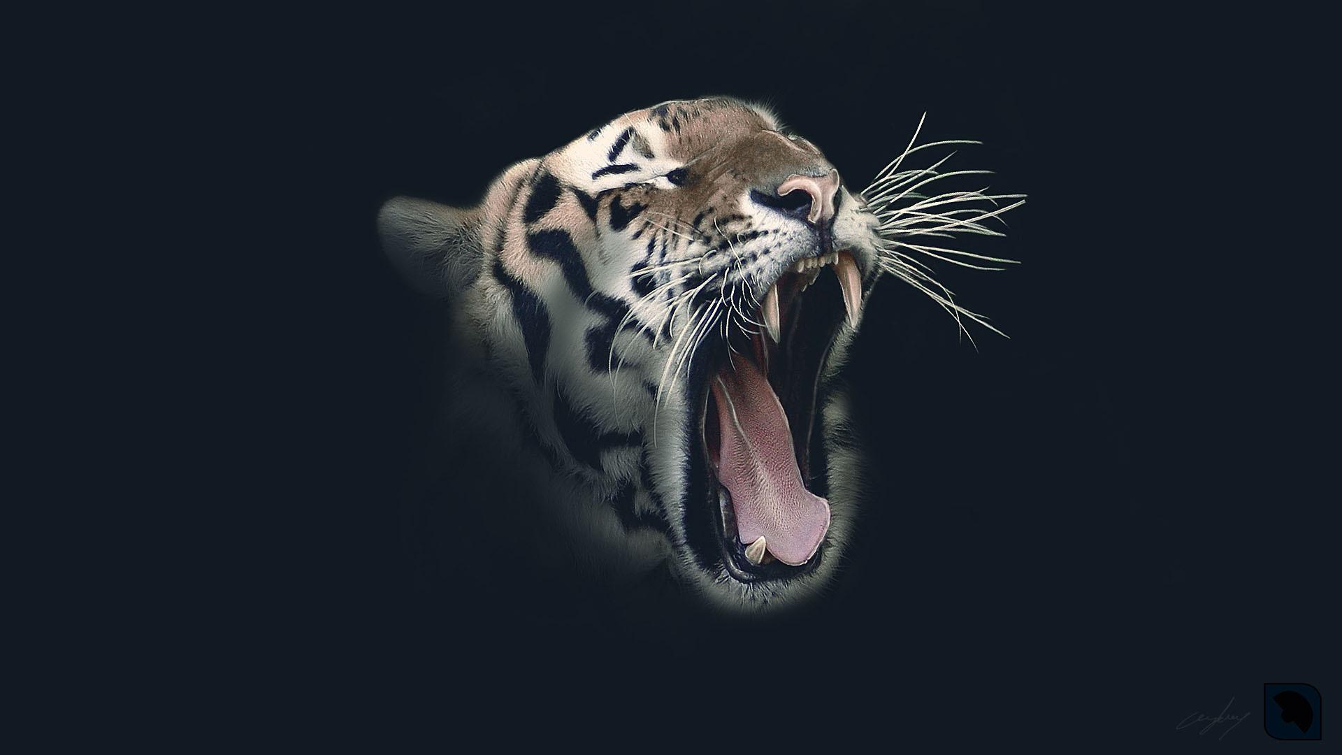 Tiger 4K