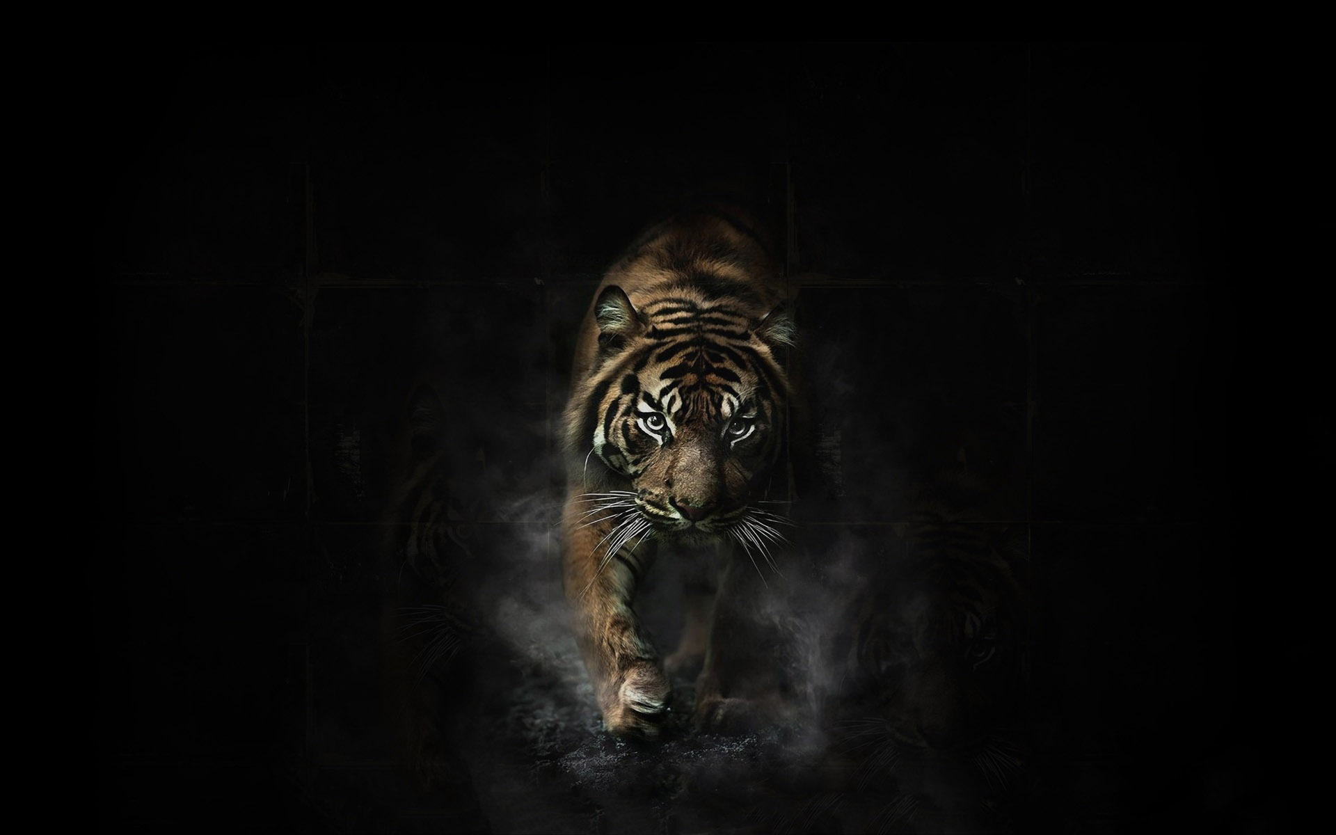 Tiger Computer Backgrounds