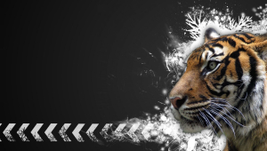 Tiger Download Free Backgrounds HD