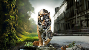 Tiger HD Wallpaper