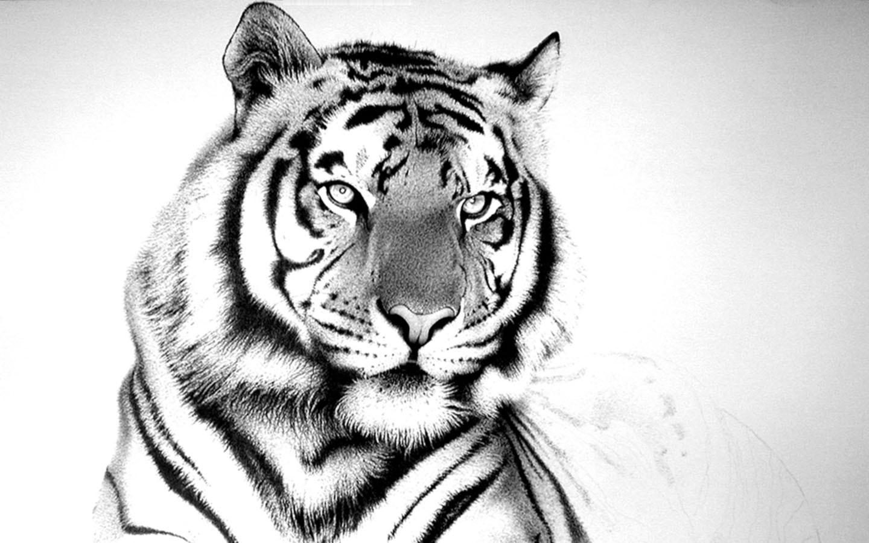 Tiger Wallpaper For Computer