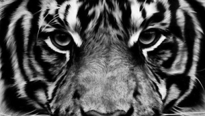 Tiger Wallpaper For Mobile