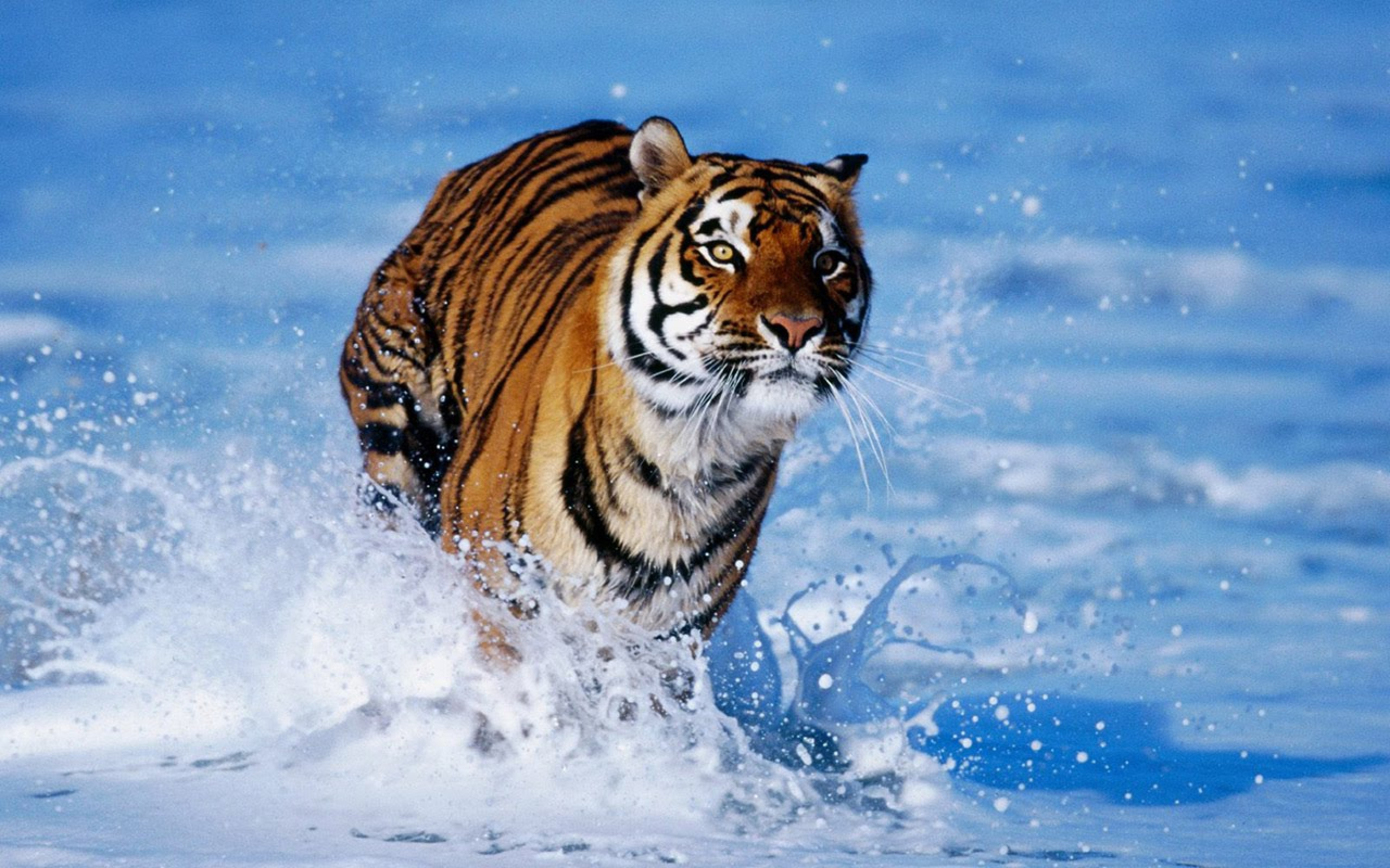 Colorful Tiger Background