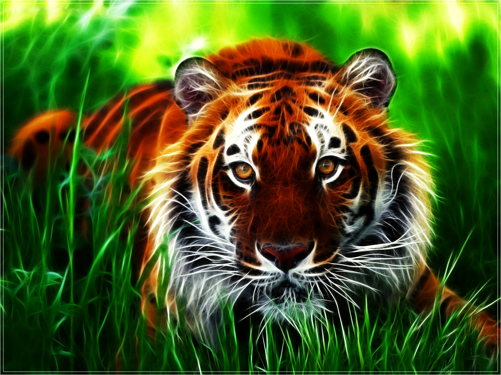 Tigers Images