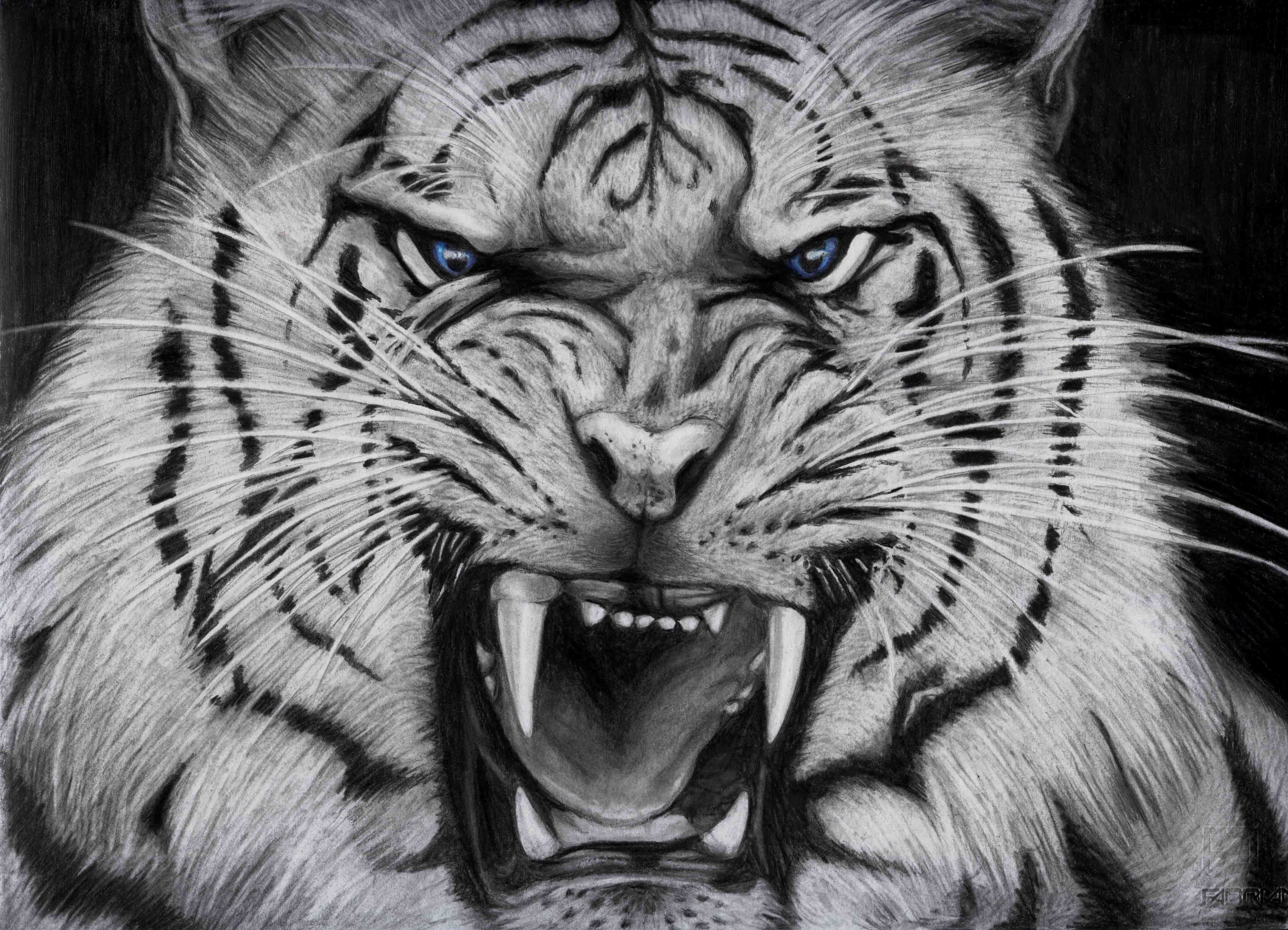 Angry White Tigers