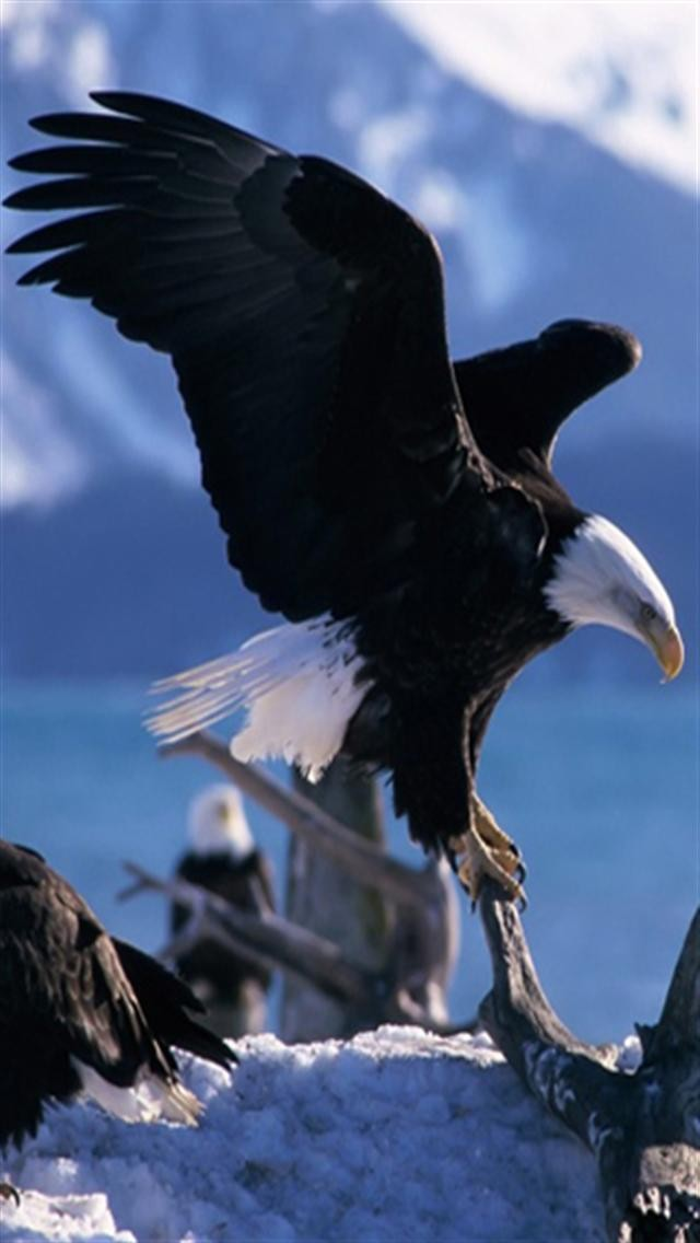 Eagle Android Wallpapers