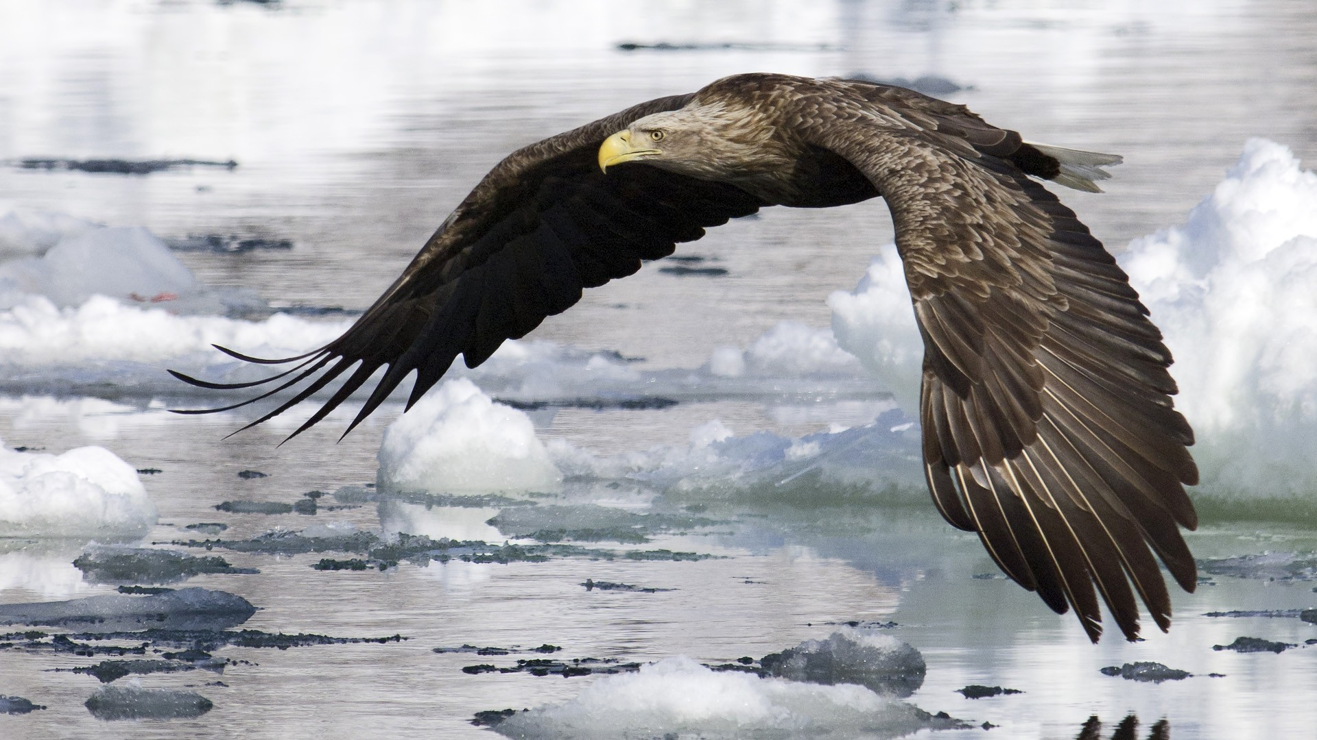 Eagle HD Desktop