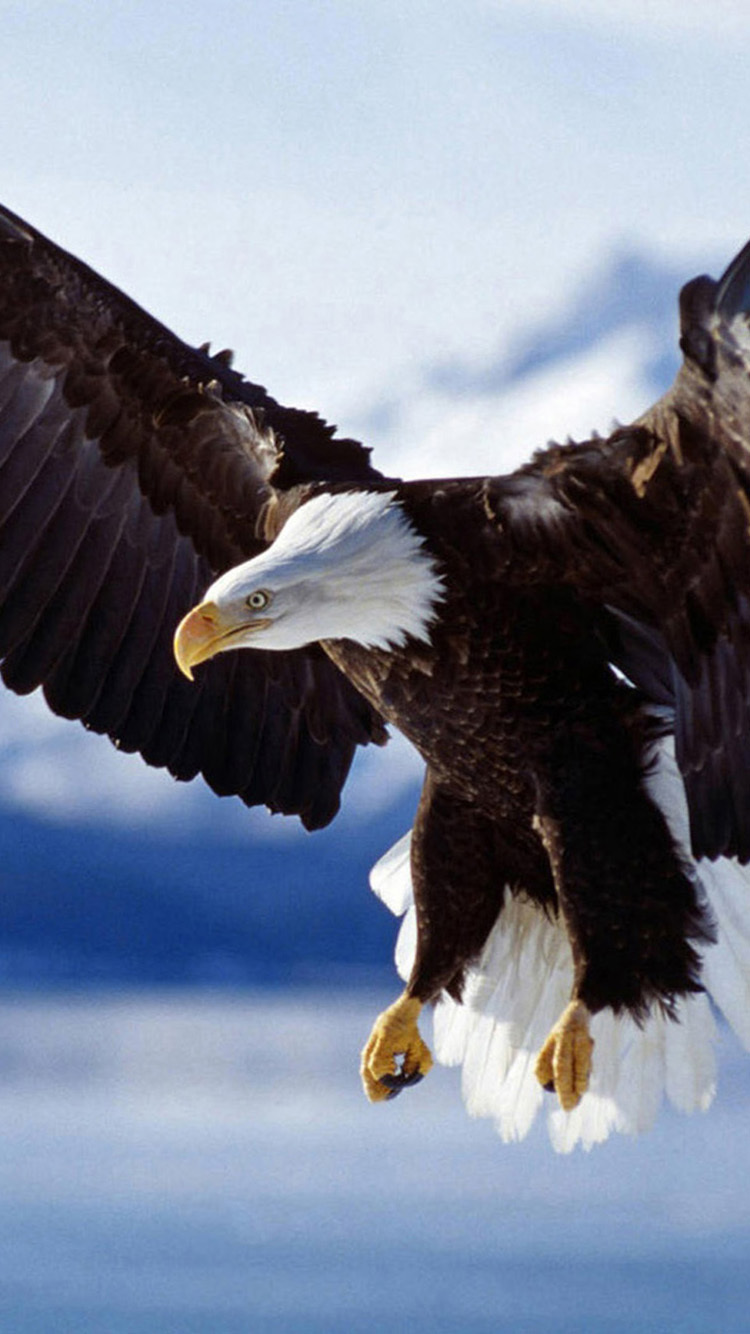 Eagle Wallpapers Images Photos Pictures Backgrounds