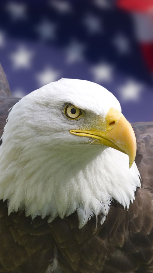 Eagle For Smartphone