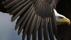 Eagle Iphone HD