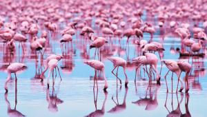 Flamingo 4K
