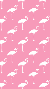 Flamingo Free Download Wallpaper For Mobile