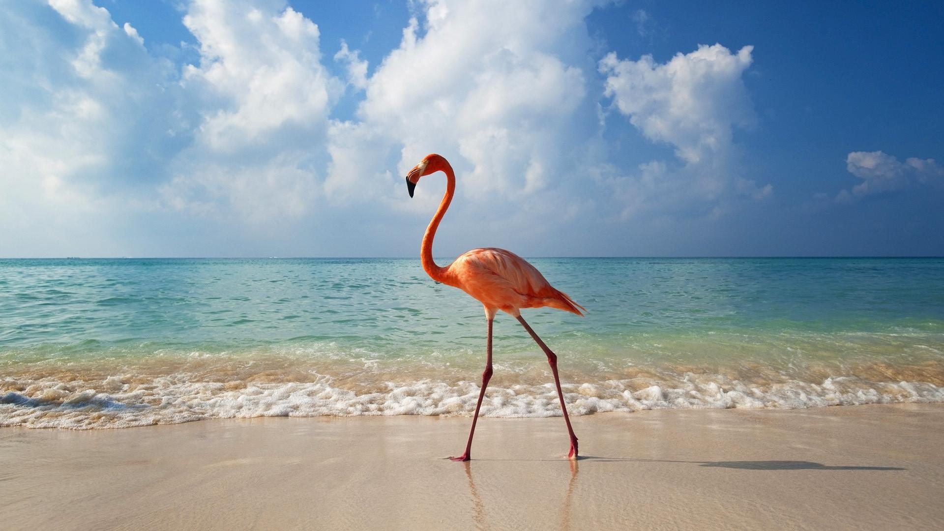 Flamingo Game
