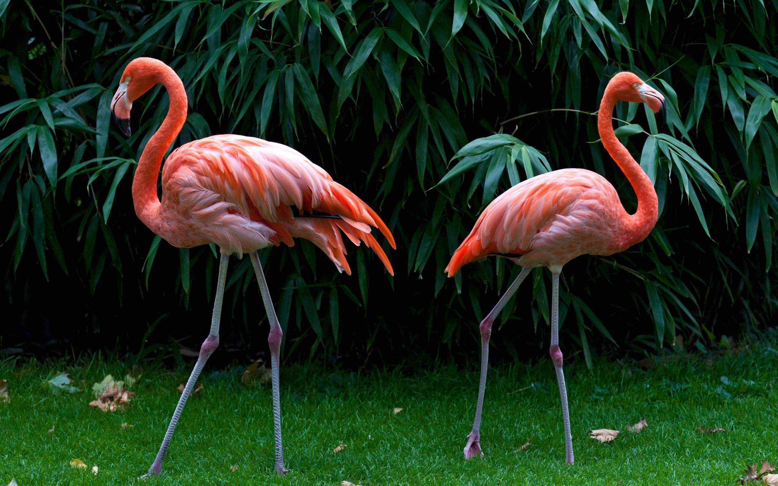 Flamingo Images
