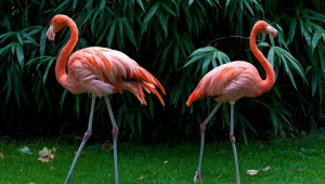 Flamingo Images