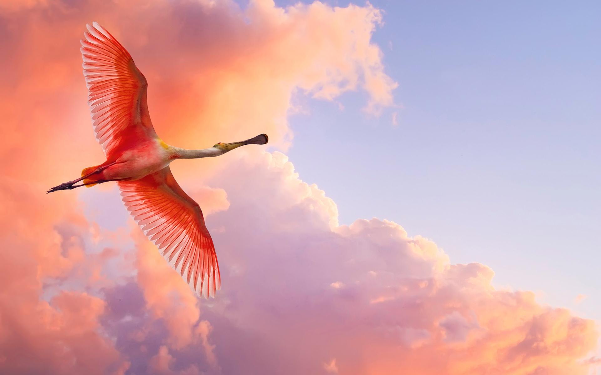 Flamingo Photos