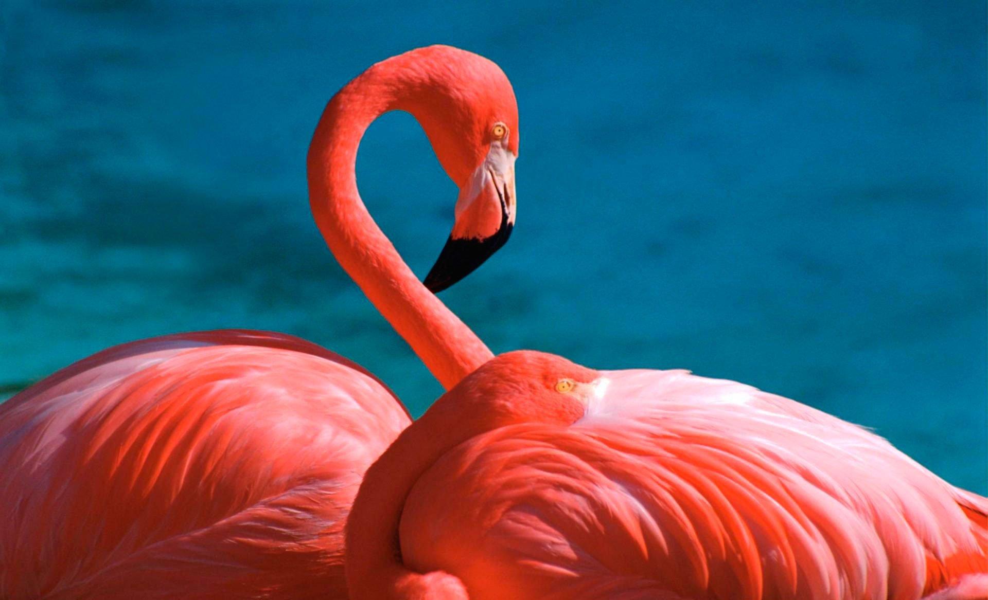 Flamingo Screenshots