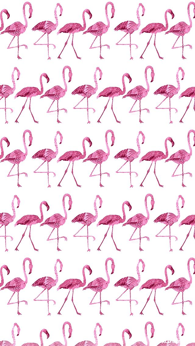 Flamingo Iphone HD Wallpaper