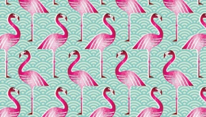 Flamingo Iphone Images