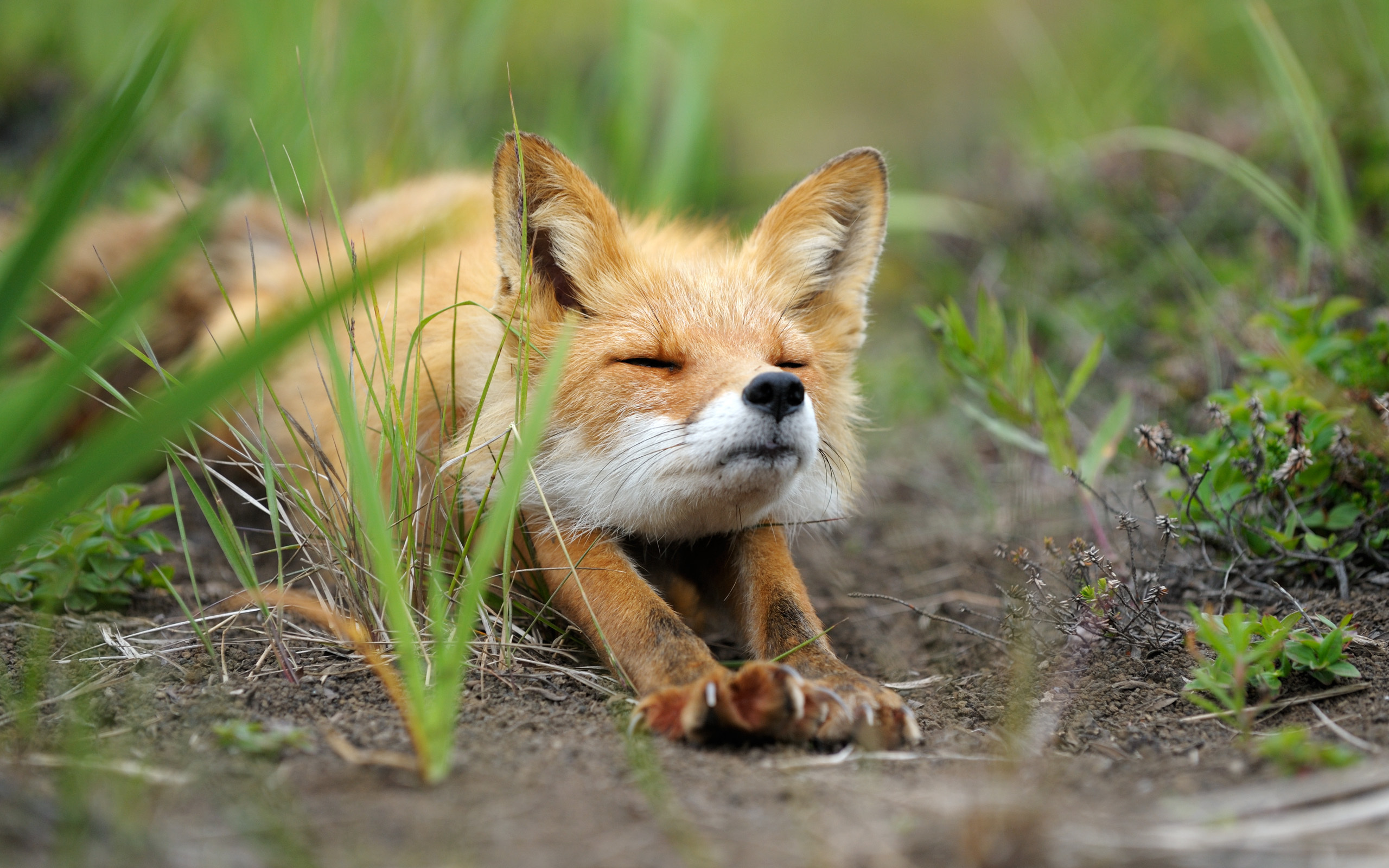 Fox Photos