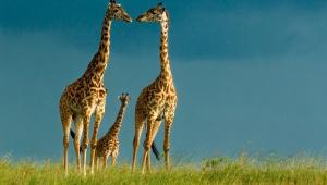 Giraffe Desktop