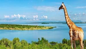 Giraffe Download Free Backgrounds HD