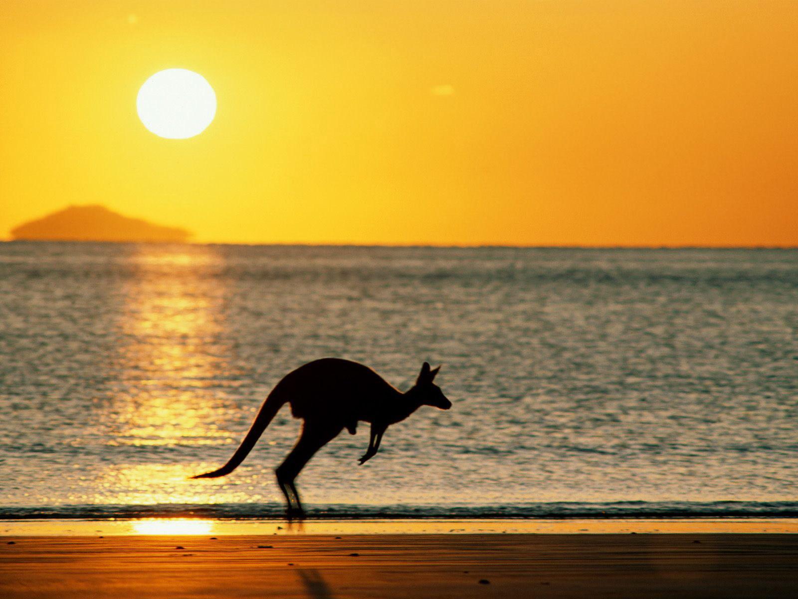 Kangaroo Desktop Images