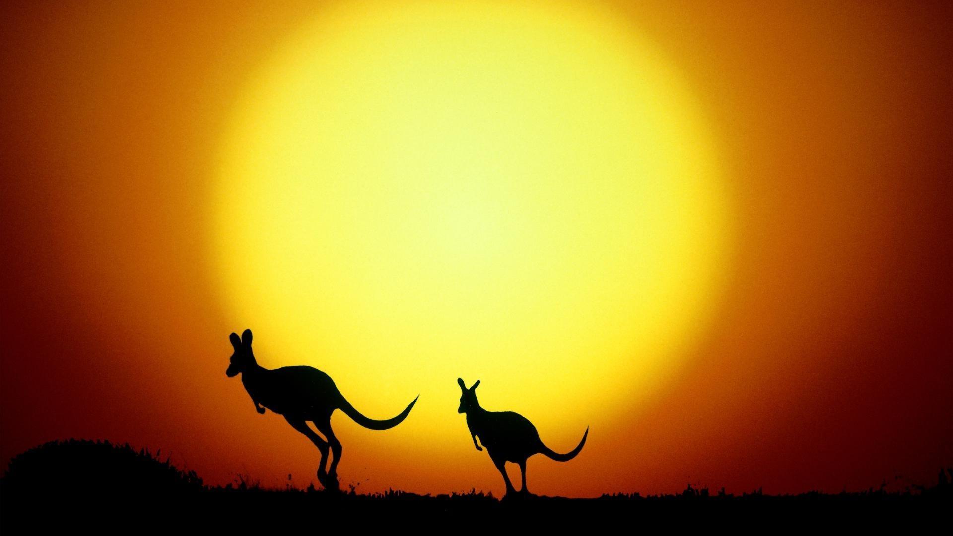 Kangaroo Wallpaper For Laptop