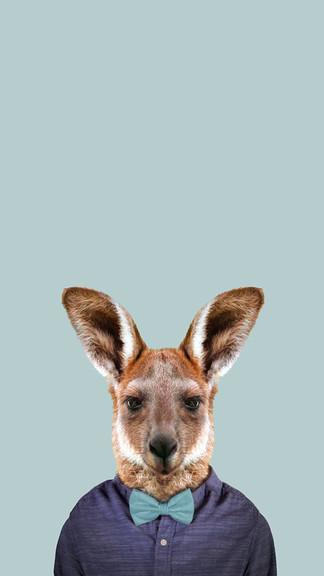 Kangaroo Iphone Background