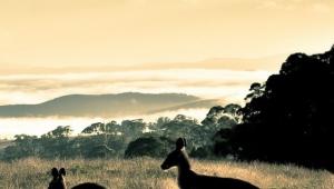 Kangaroo Iphone Wallpapers