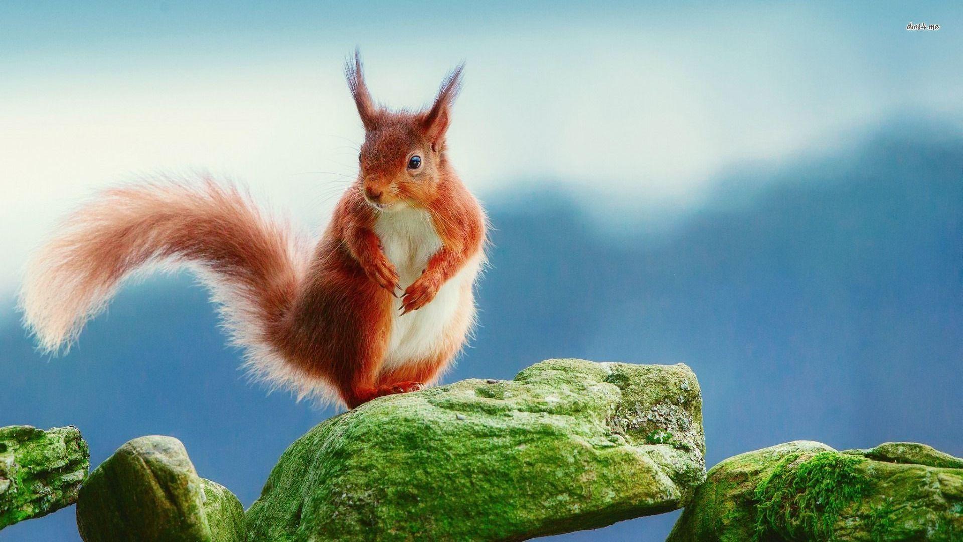 Pictures Of Squirrel