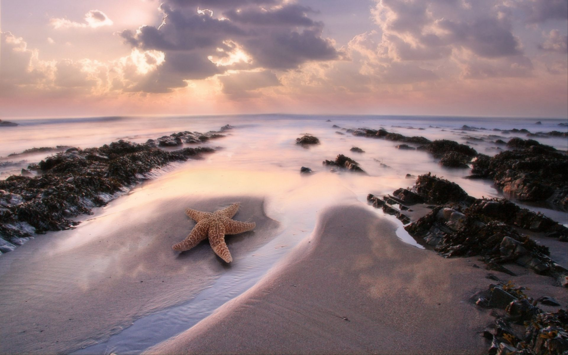 Pictures Of Starfish