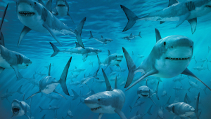 Shark Free Download