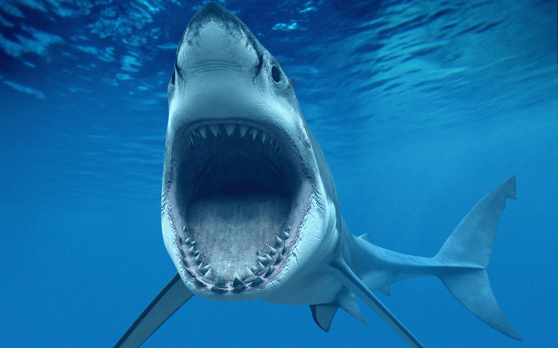 Shark Wallpaper For Laptop