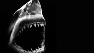 Shark Full HD