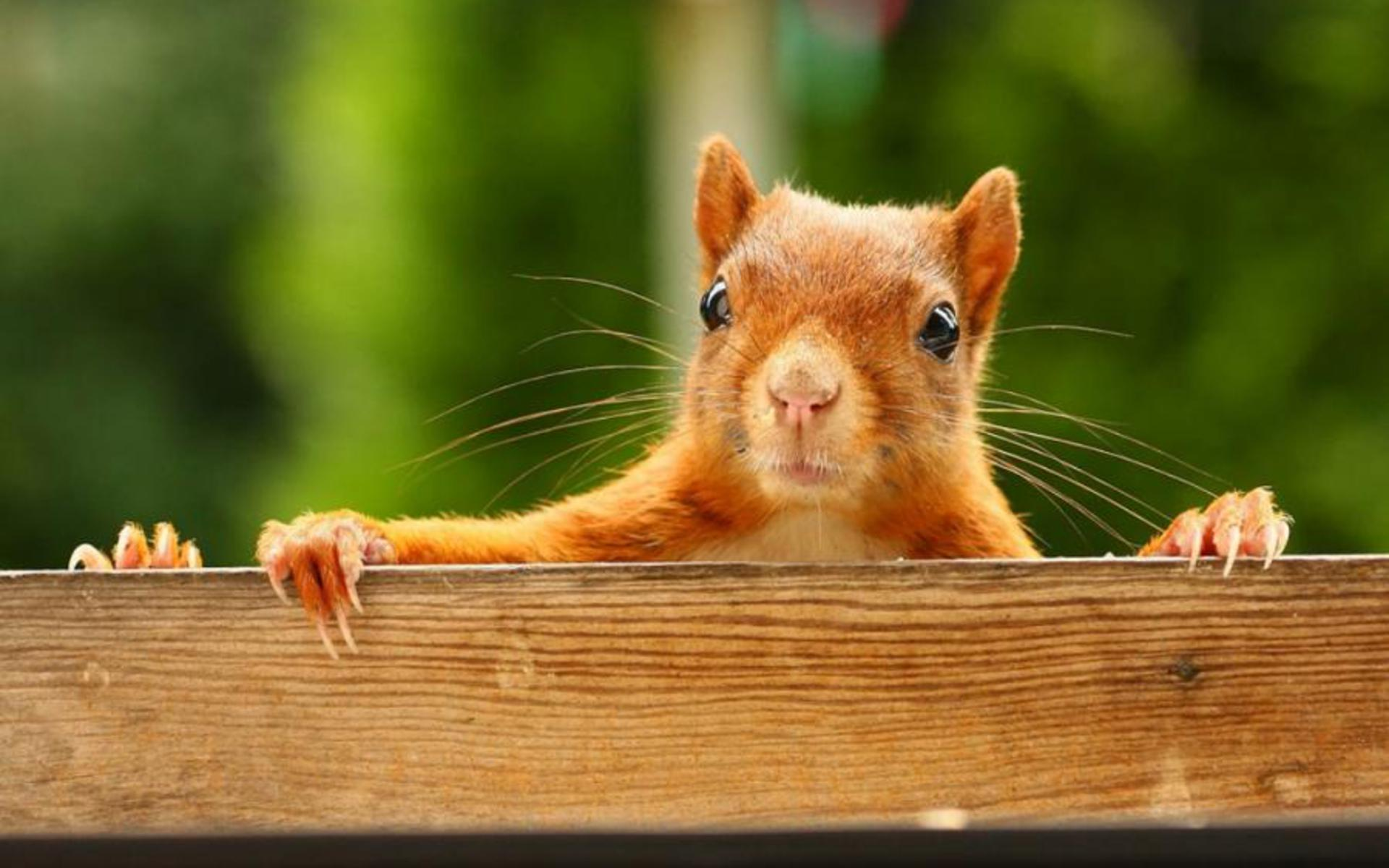 Squirrel Computer Backgrounds