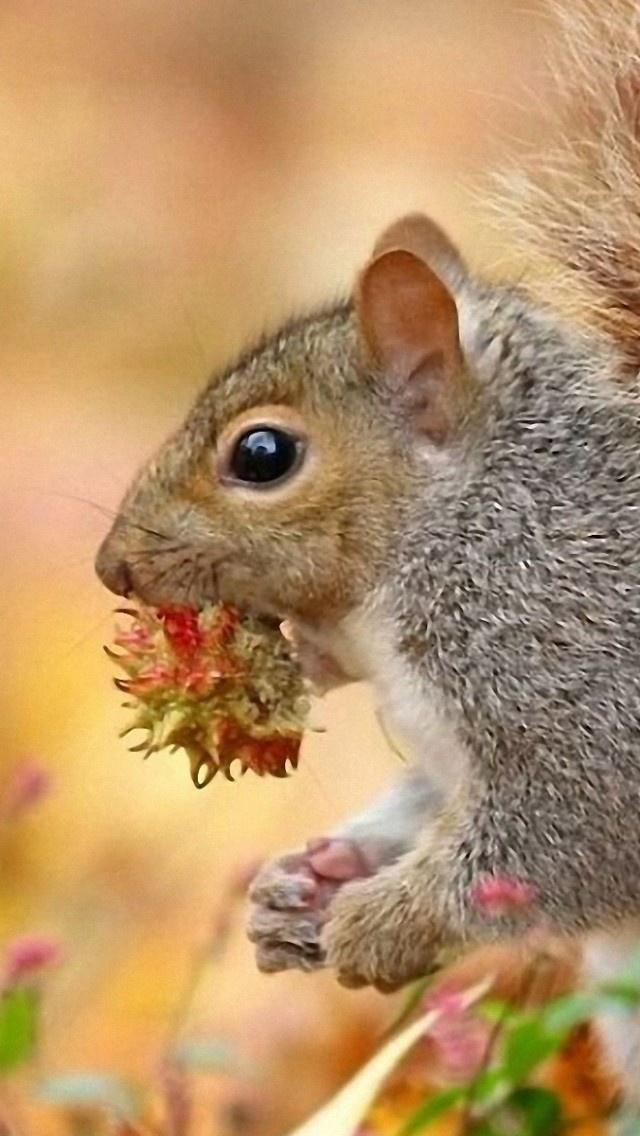 Squirrel Desktop For Iphone