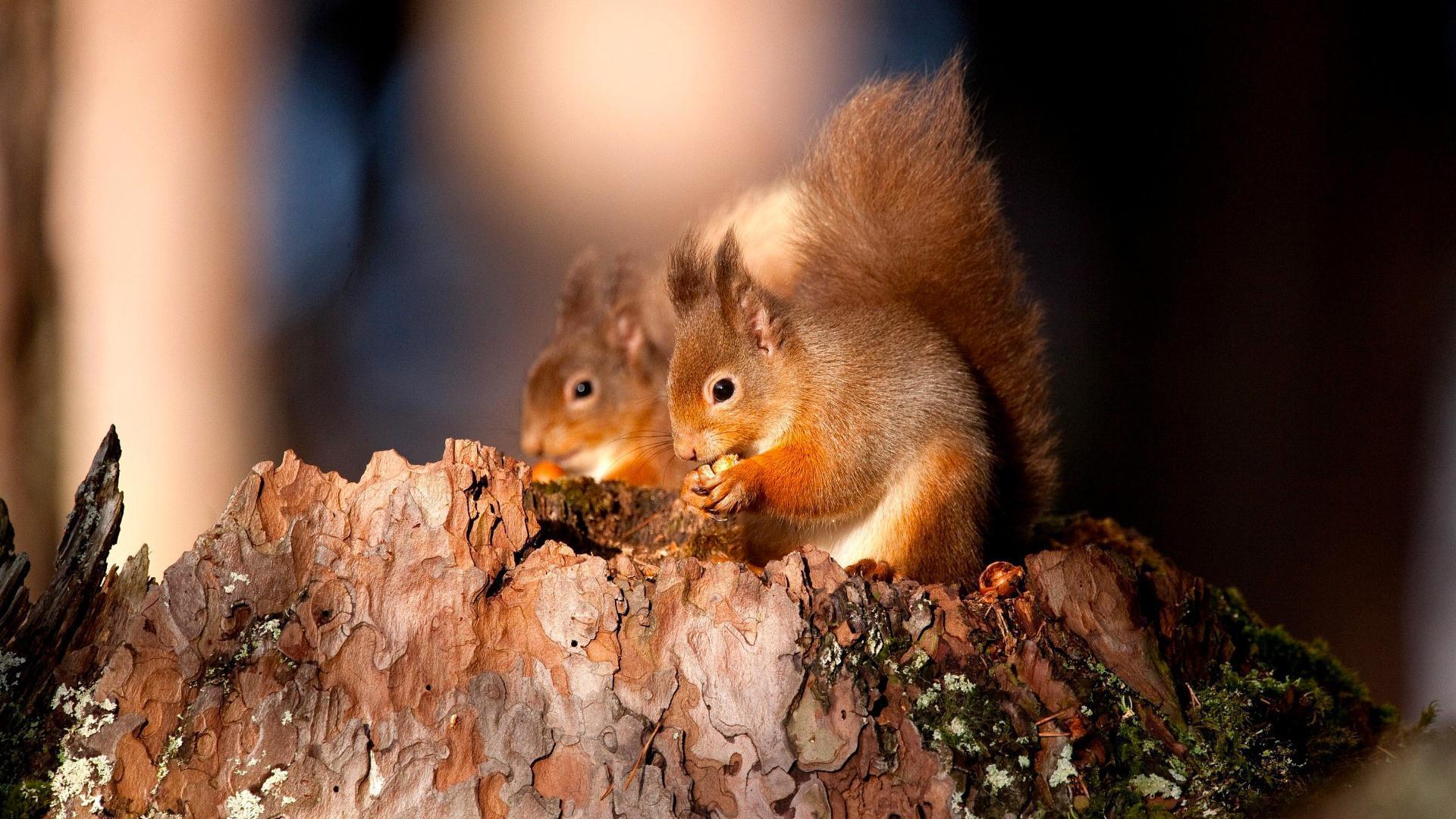 Squirrel High Definition
