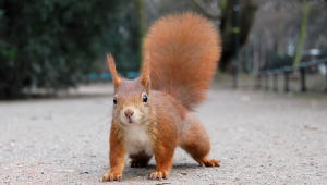 Squirrel High Quality Wallpapers