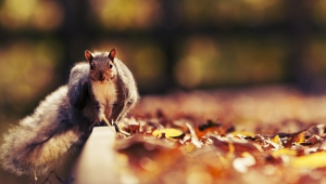 Squirrel Wallpaper For Computer