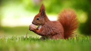 Squirrel Wallpapers HQ