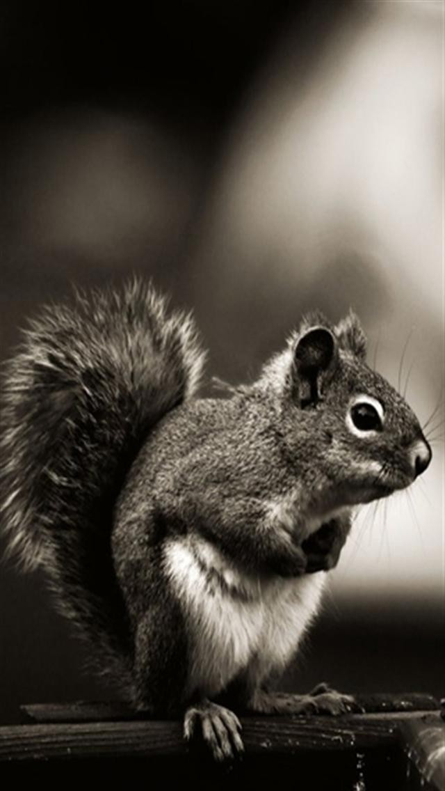 Squirrel For Smartphone