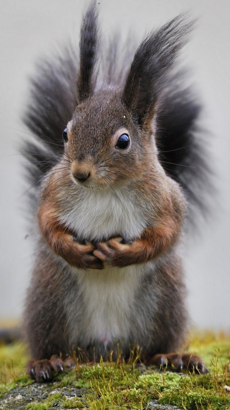Squirrel Iphone Images