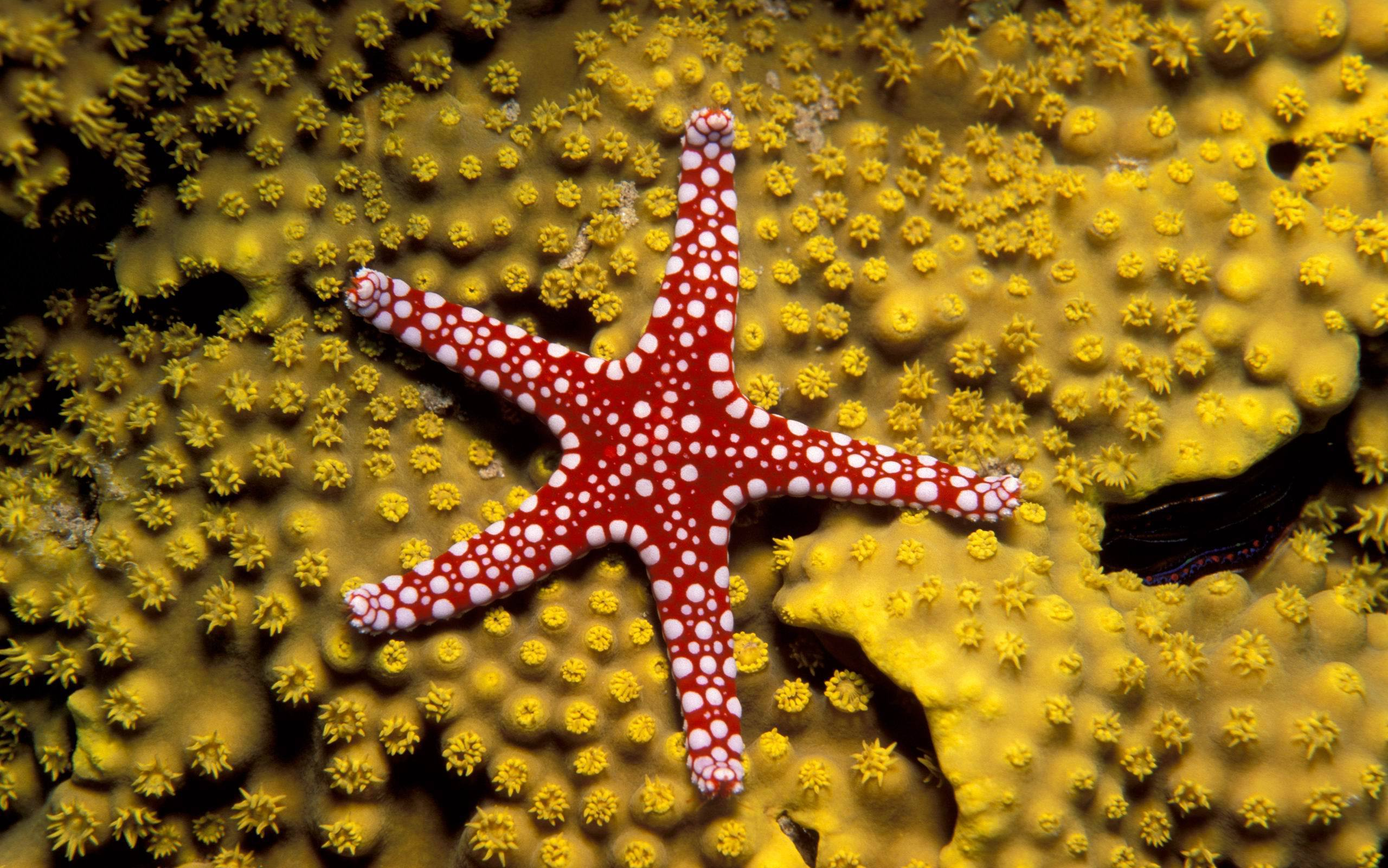 Starfish Computer Wallpaper