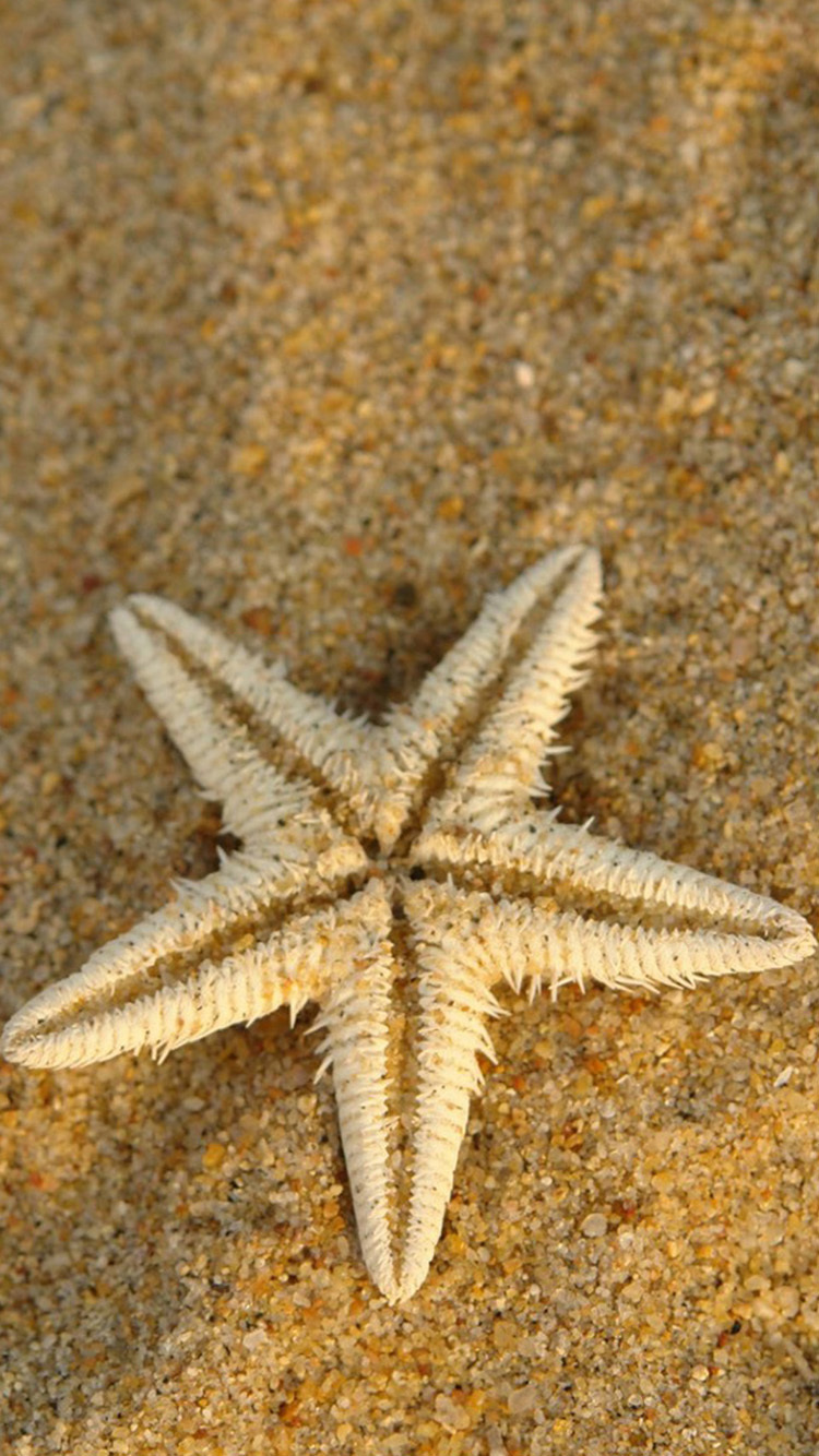 Starfish Desktop For Iphone