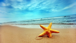 Starfish HD Background