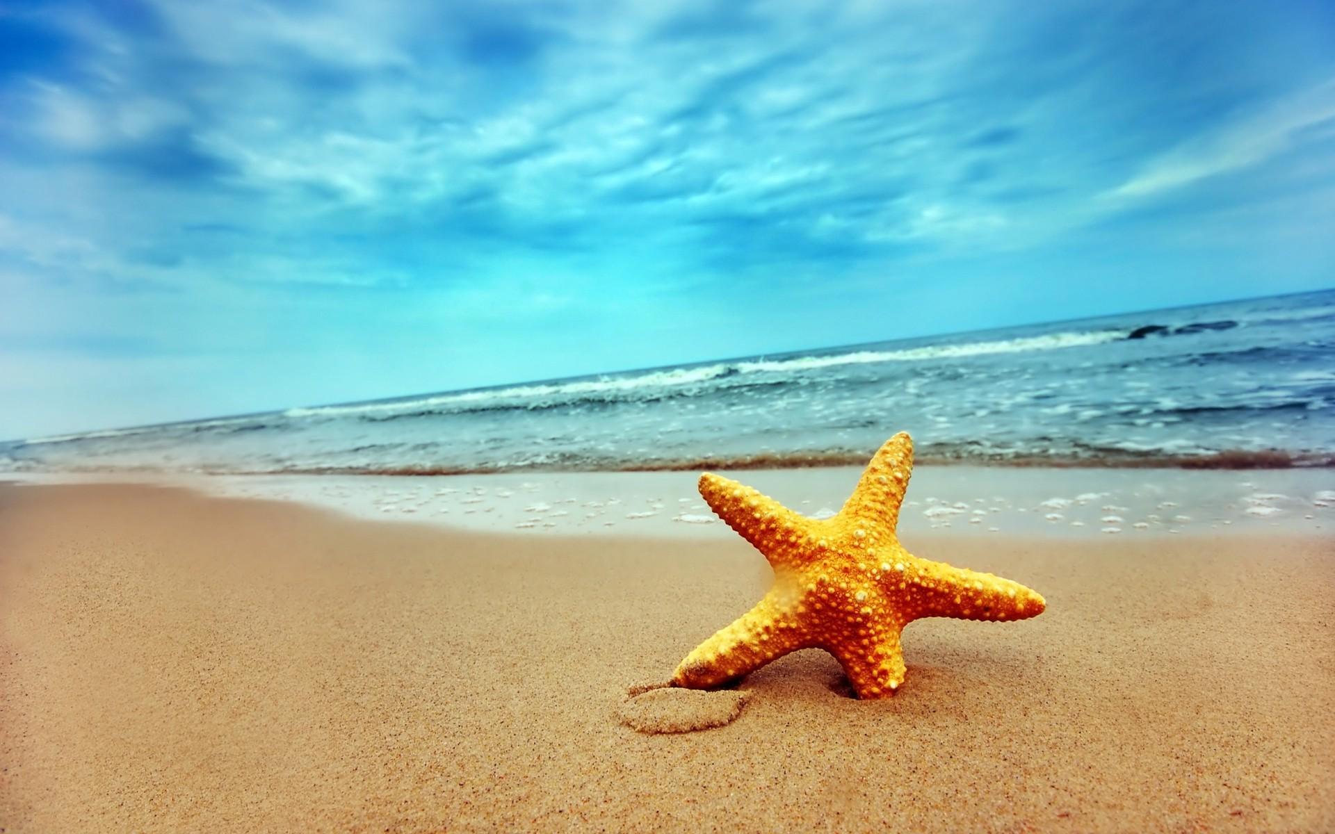 Starfish HD Background