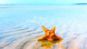 Starfish HD Wallpaper
