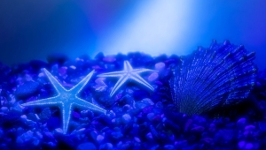 Starfish High Quality Wallpapers