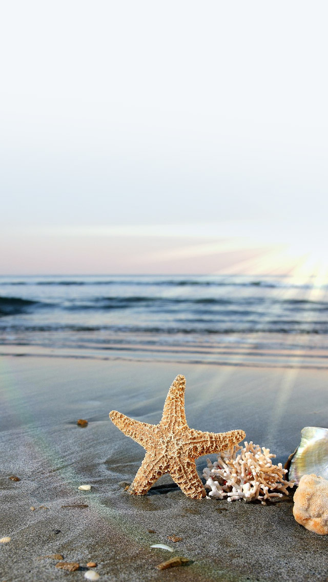 Starfish High Quality Wallpapers For Iphone